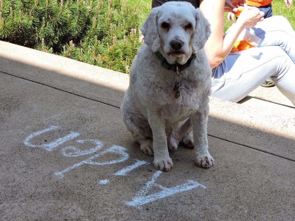 Image Result For Dog Potty Training