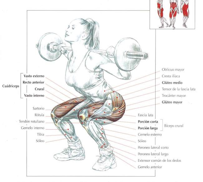 músculos utilizados en la sentadilla con barra