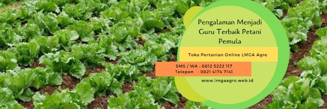 pengalaman,usaha pertanian,budidaya tanaman,pertanian,petani,lmga agro