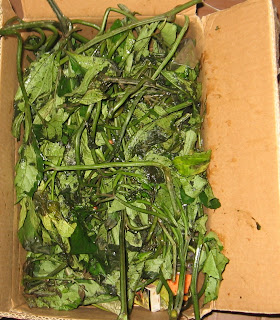Ugu vegetable beginning to wilt