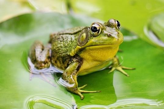 Ciri-ciri katak