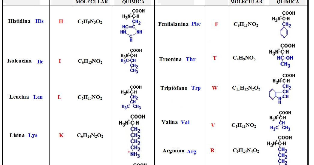 Cadenas laterales de los amino acidos para bajar de peso