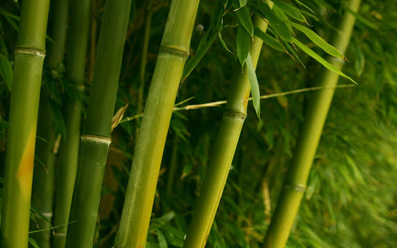 Bambus download besplatne pozadine za desktop 1680x1050