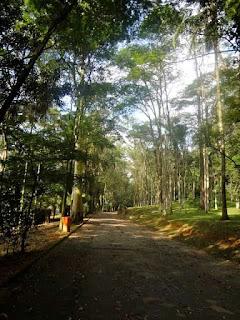 Trilha no Horto Florestal - SP
