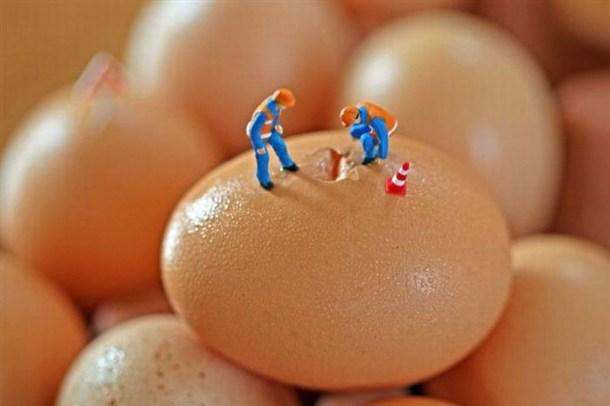 obreros reparando huevos