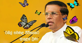 """Ranil entered a butterfly life!"" -- Mathri"