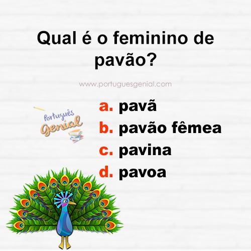 Feminino de pavão - Qual é o feminino de pavão?