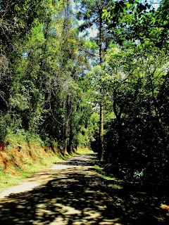 Trilha da Pedra Grande, Parque Estadual da Cantareira - São Paulo