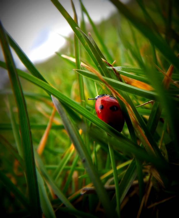 Ladybird Ladybird Fly Away Ladybird Or Maybe Give Me A Lift Up The Hill?