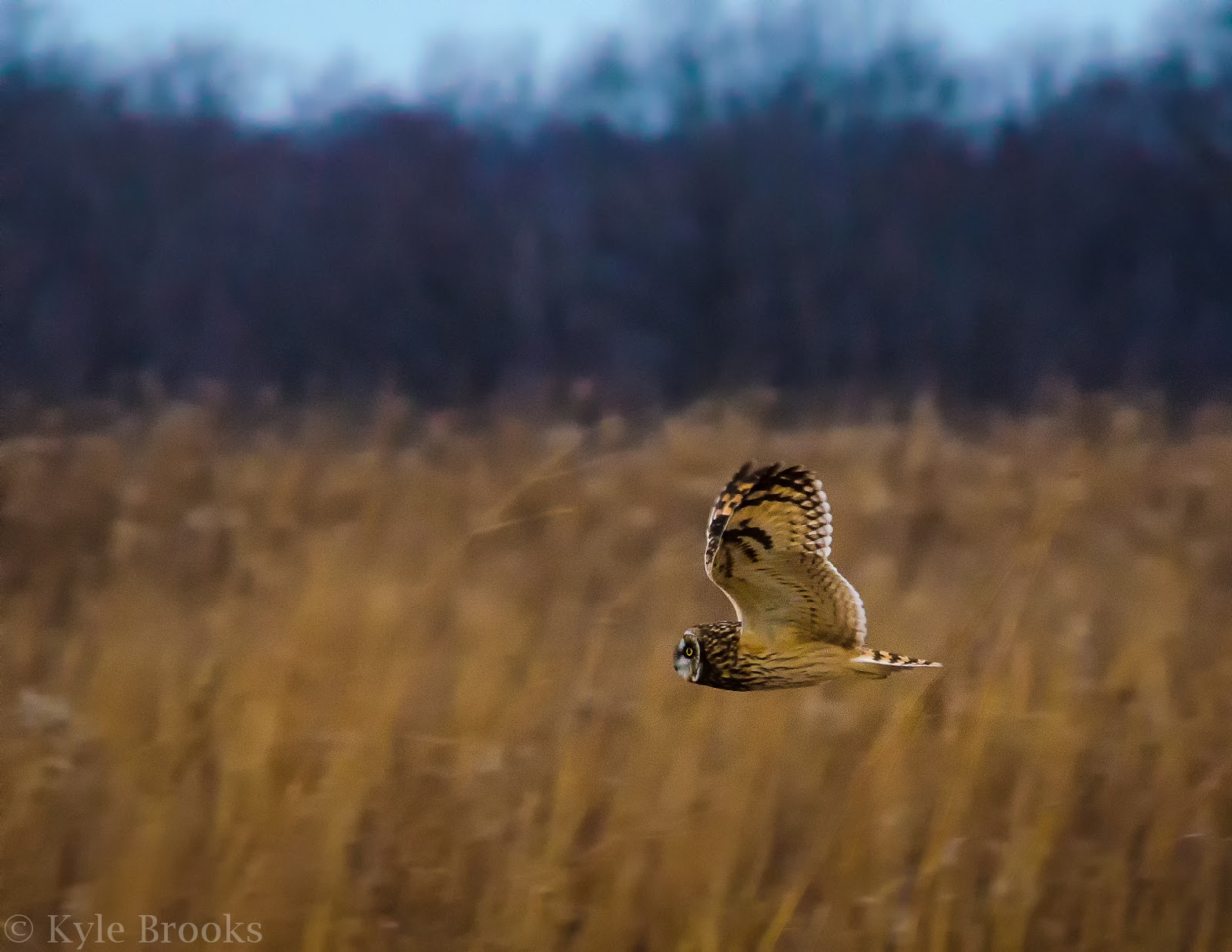 Ethics of Photographing Owls