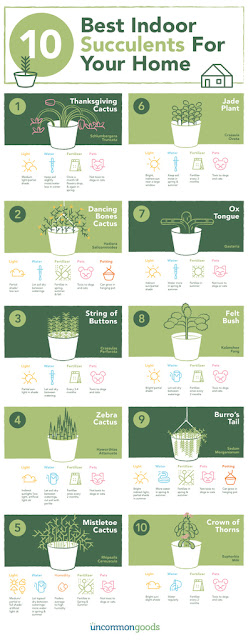 Ten best succulent plant infographic