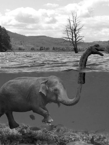 Funny Picture - Loch Ness Monster Elephant