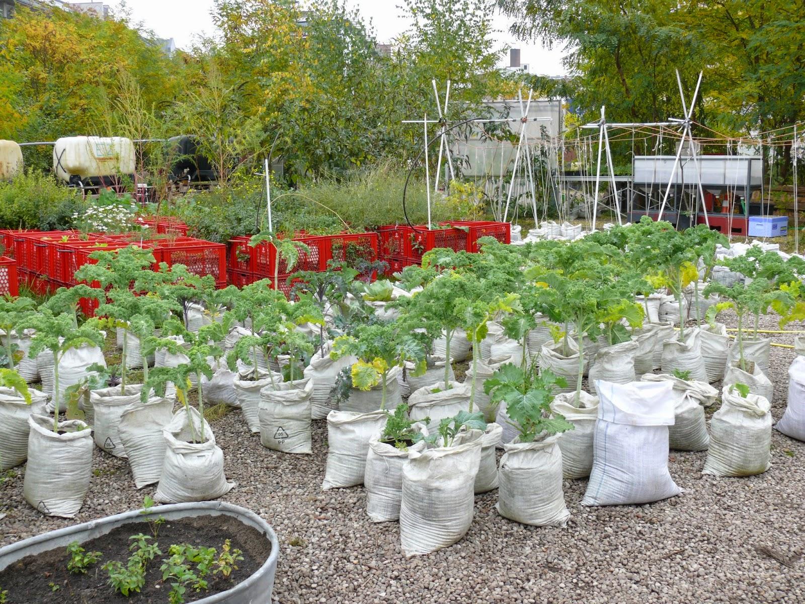 Aus Landwirtschaft Und Gartenbau: Nachrichten Und