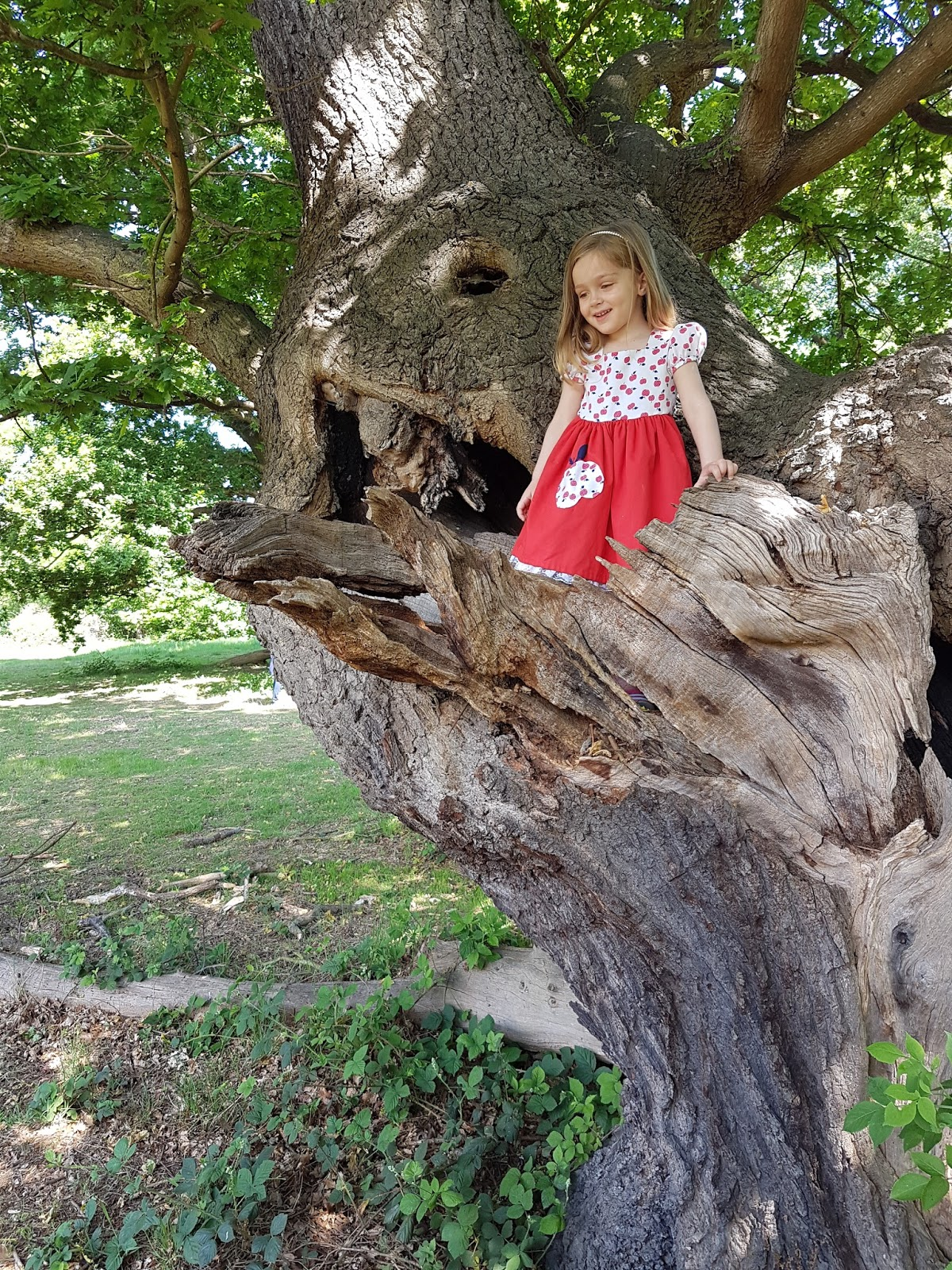 girl in a tree in epping forest