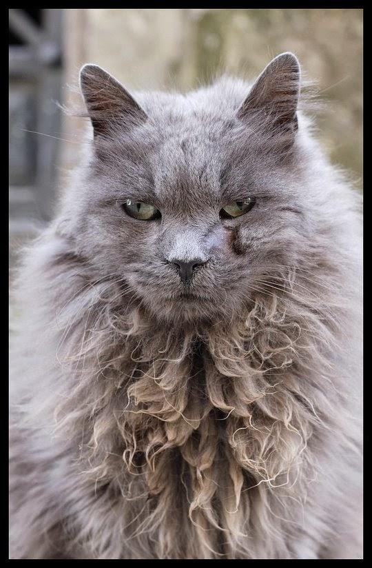 cats recoleta cemetery