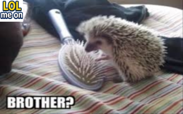 Brother ? - Funny Picture With Caption Funny pictures