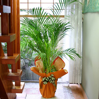 Air Purifying Plants In India