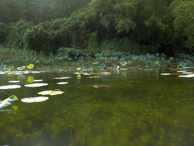 チャンアン(Trang An)の水はきれい