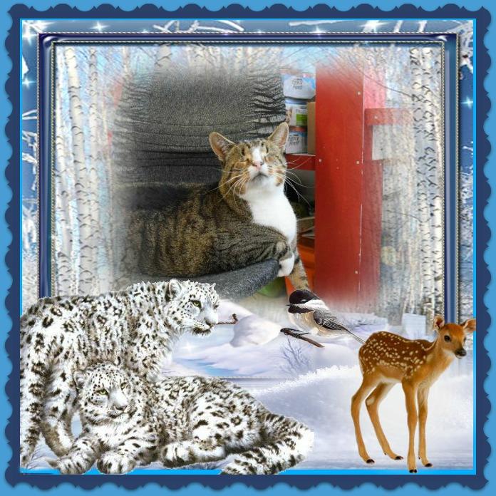 Blind Cat Rescue Nj