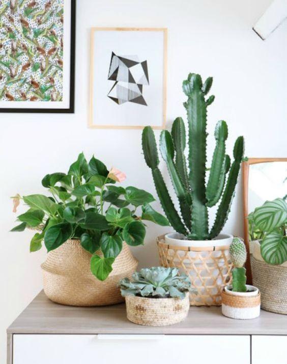 cactus-cestas-junco