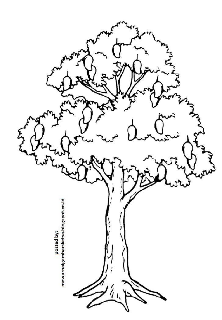 55 gambar sketsa burung hinggap di pohon paling gokil