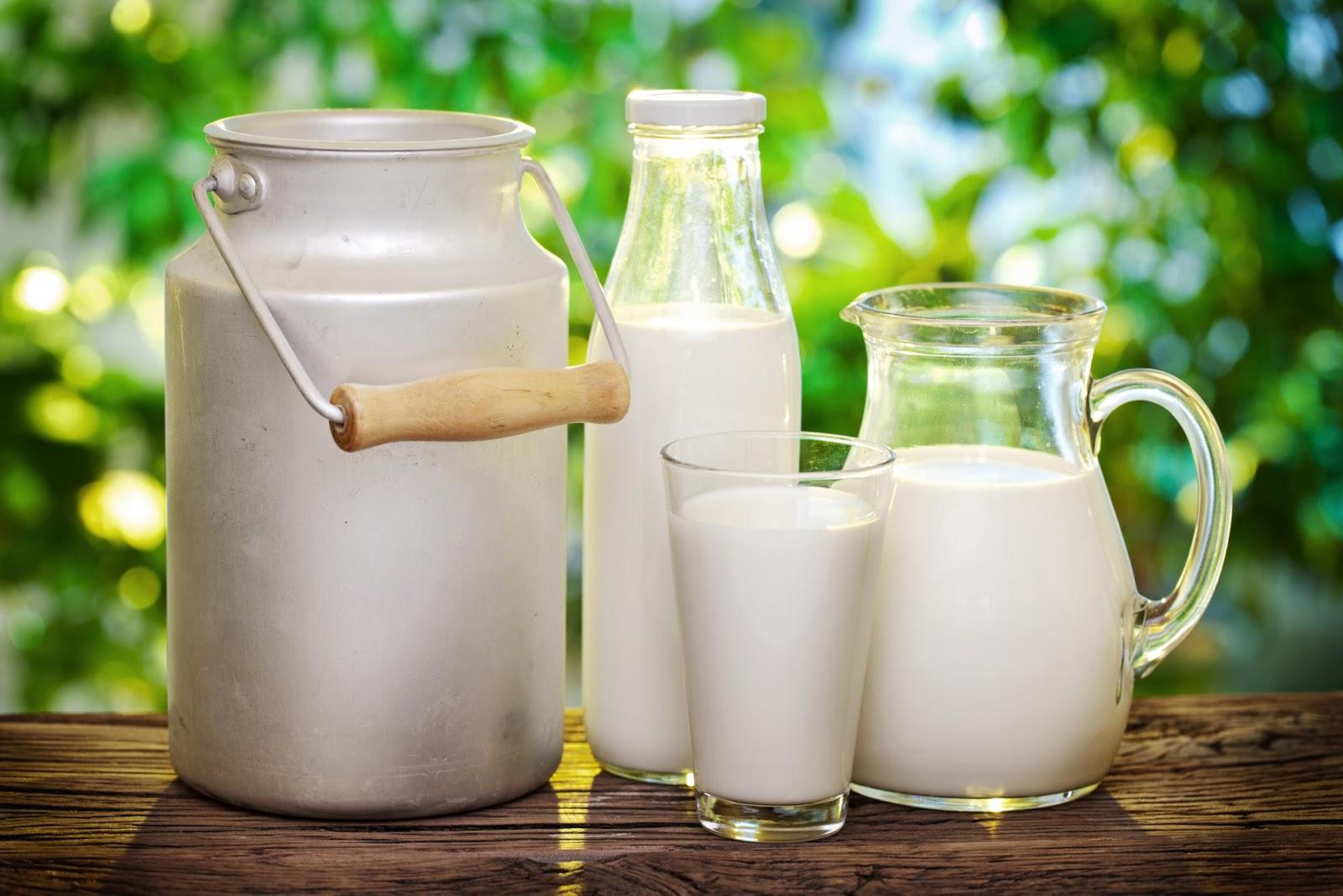 أيهما أفضل الحليب خالي الدسم و الحليب كامل الدسم لكمال الأجسام كمال اجسام عالم عرب