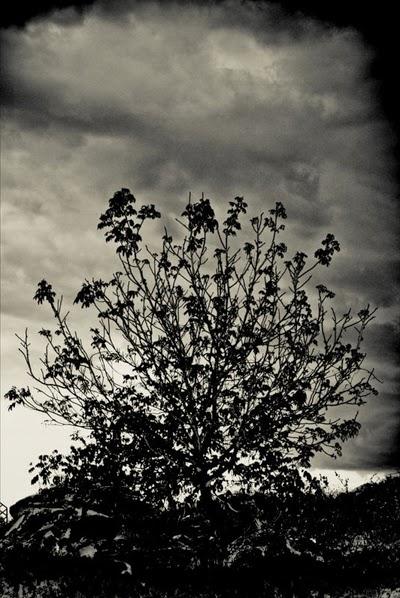 Storm by MacSimic