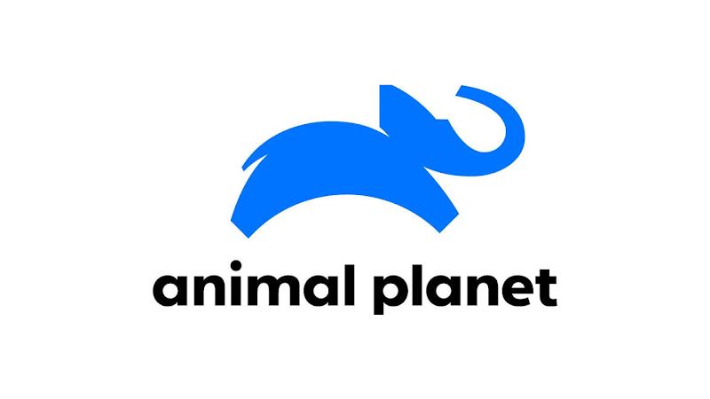Assistir TV Animal Planet Ao Vivo HD