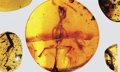Βρέθηκε μέσα σε κεχριμπάρι και έχει ηλικία 99 εκ. έτη! Είναι αυτή η πρώτη σαύρα στην Γη;
