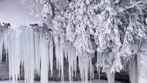 Desktop HD Wallpaper Winter Trees Snow Frost Ice