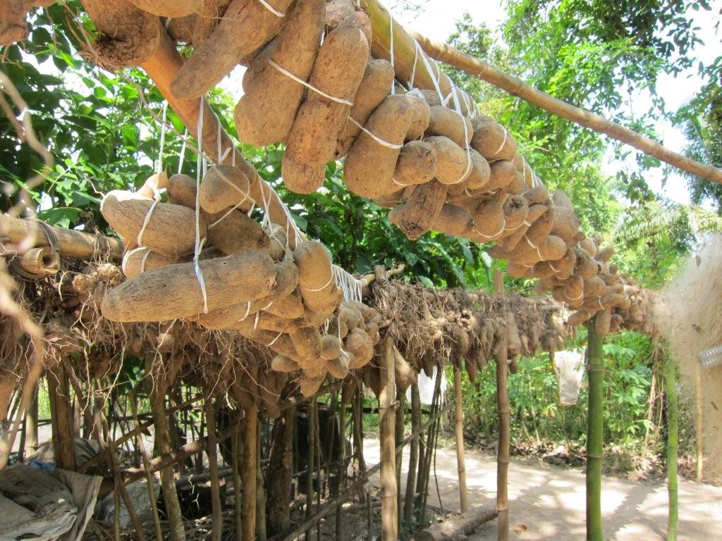 Image result for yam farming
