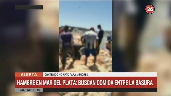 Mar del Plata: la gente busca pollos en mal estado tirados por supermercado