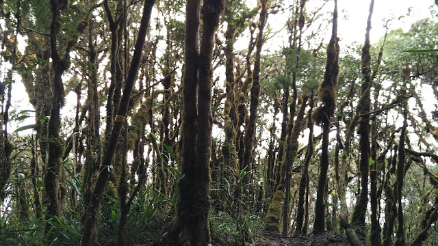 Pendakian Gunung Latimojong Sulawesi Selatan