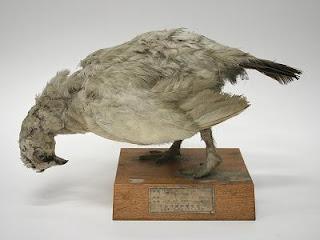 http://museum-database.shimane-u.ac.jp/specimen/metadata/419