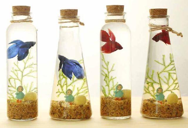 Jenis Ikan Hias yang Dapat Dipelihara dalam Toples Kecil