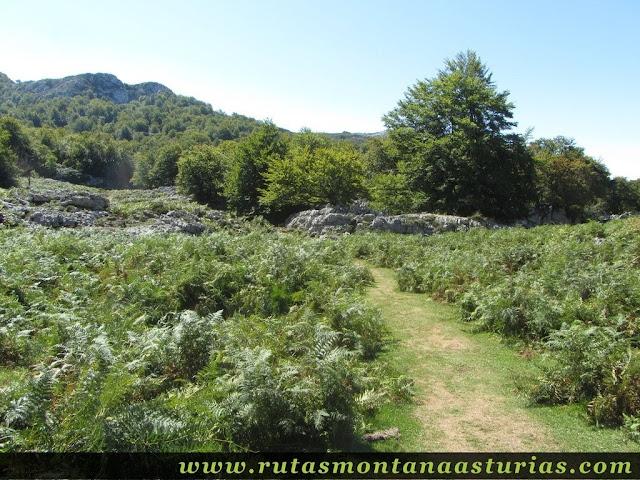 Ruta Lagos de Covadonga PR PNPE-2: Entrando en el Bosque Palomberu