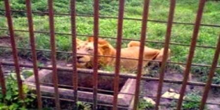 Kebun Binatang Sang Kulim alamat kebun binatang sang kulim lokasi kebun binatang sang kulim kebun binatang sang kulim pekanbaru
