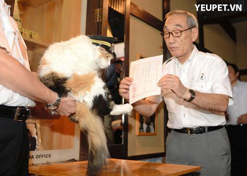 Nitama: chú mèo được bổ nhiệm làm trưởng ga tàu nhật