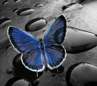 blue butterfly macro mobile resolution hd wallpaper