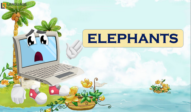 [Animals 15] Elephants l How to Teach animals for kids