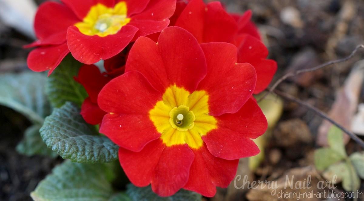photo macro fleur