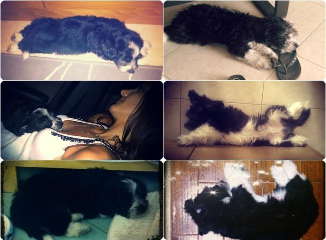 puppy that sleeps