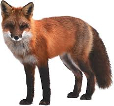 M3CR MINT FOX 6 0 SPD7731 (HANG LOGO DEAD RECOVER FIX) STOCK ROM PAC