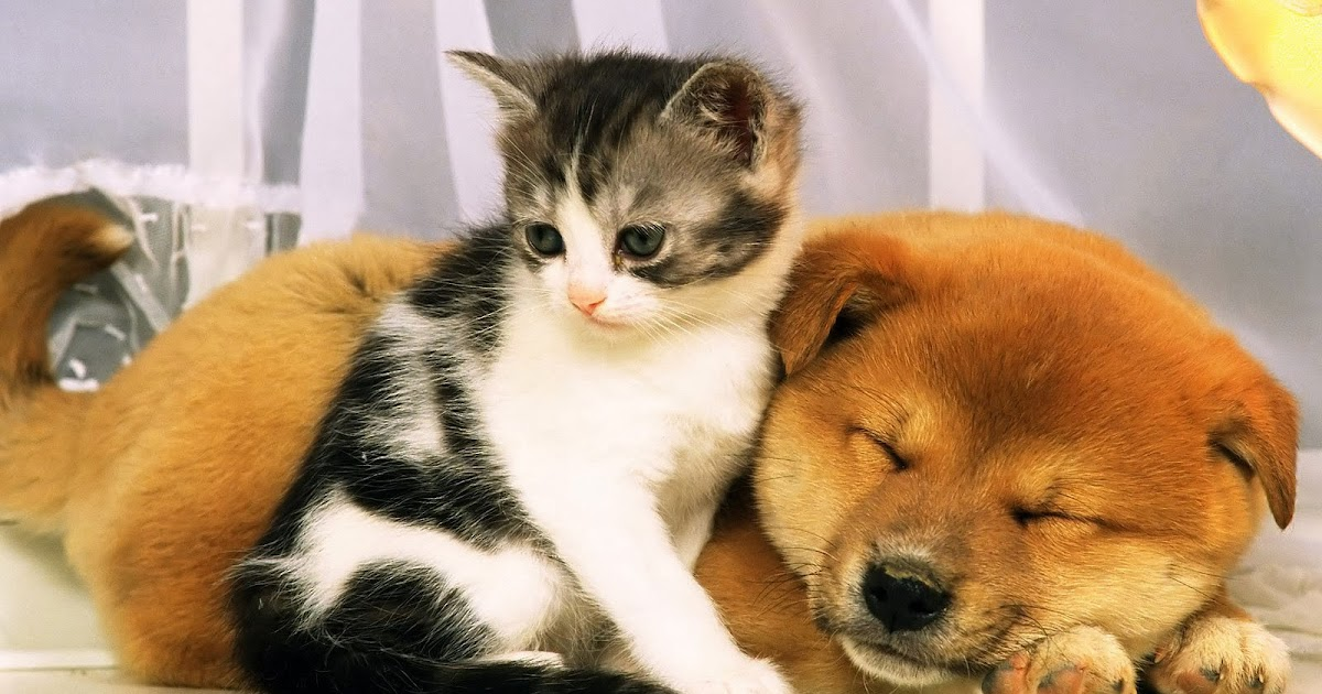 Hunde Und Katzen Spiele Kostenlos