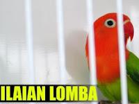 Beberapa Kriteria Penilaian Kontes Lovebird
