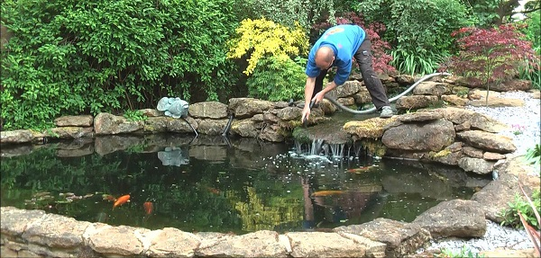 How to Clean a Natural Pond