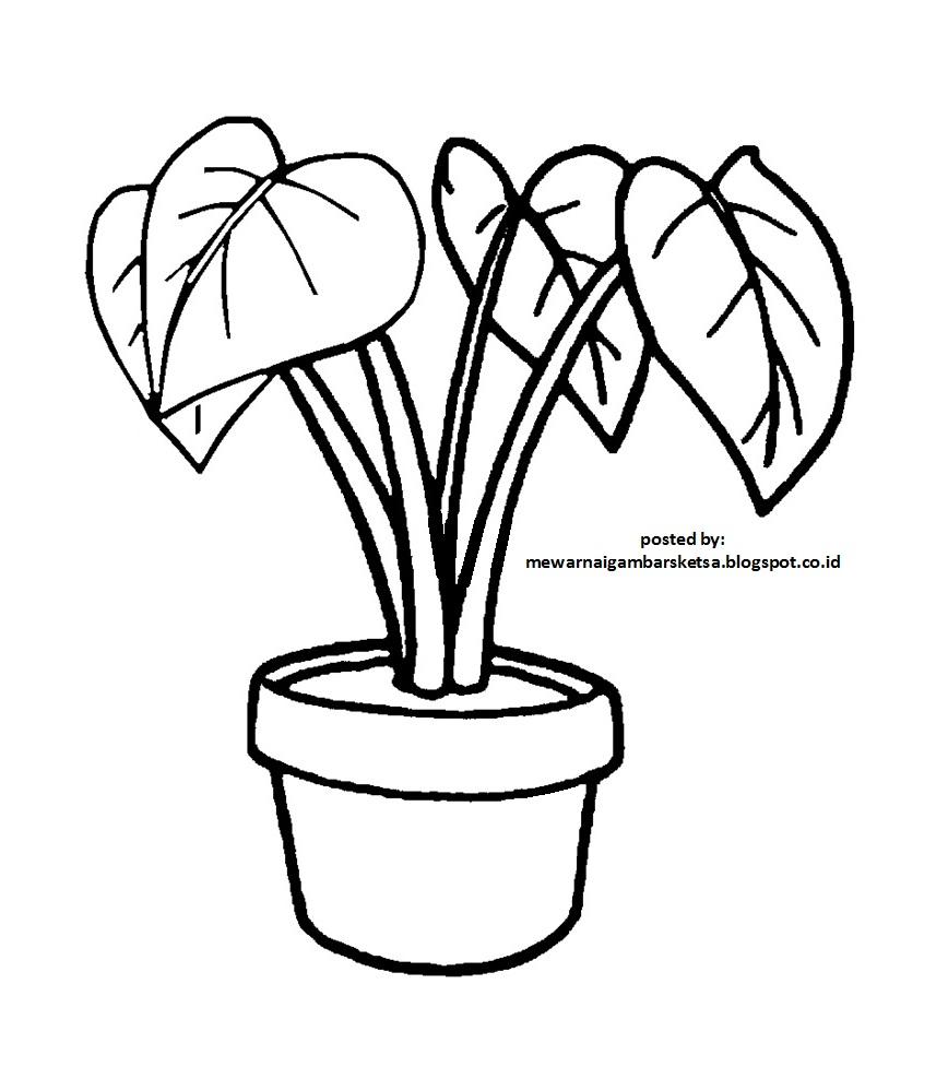 Mewarnai Gambar Sketsa Bunga 1
