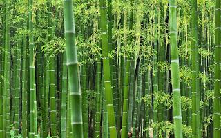 Bureau Veritas tiene a battesimo il bamboo napoletano