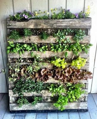Come coltivare piante e spezie sul balcone riciclando bancali