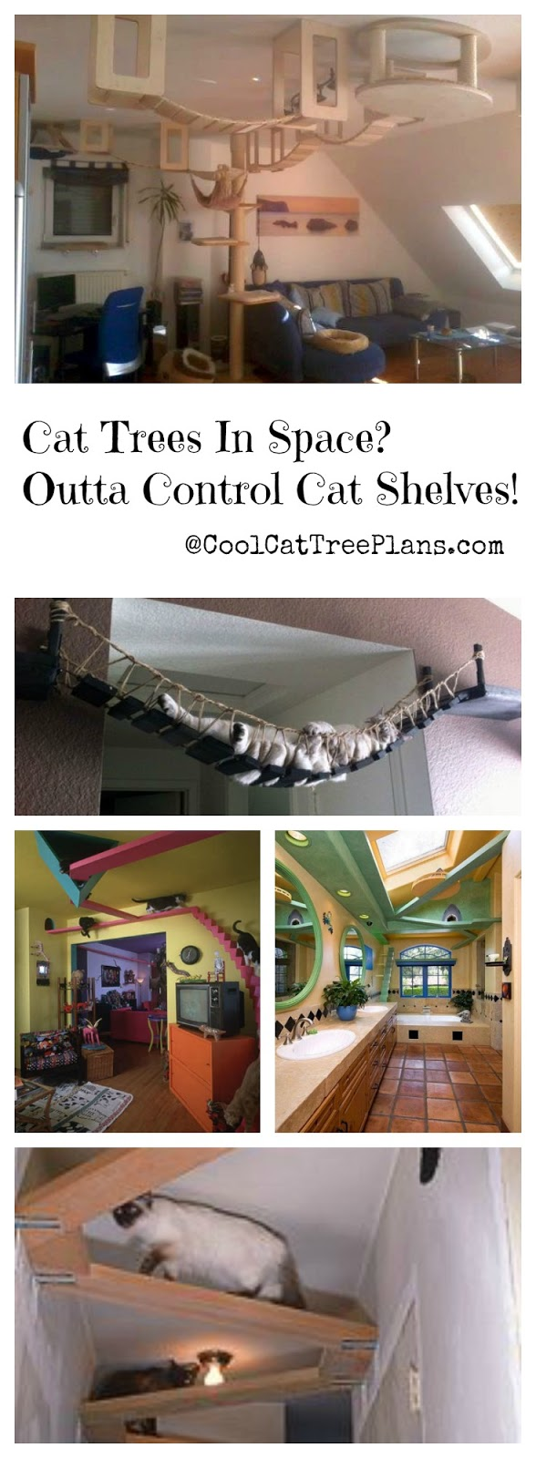 ♥ Cool Cat Stuff ♥ Build a cat gym on your celing with cat shelves. The cat tree is how the cats get up to it.